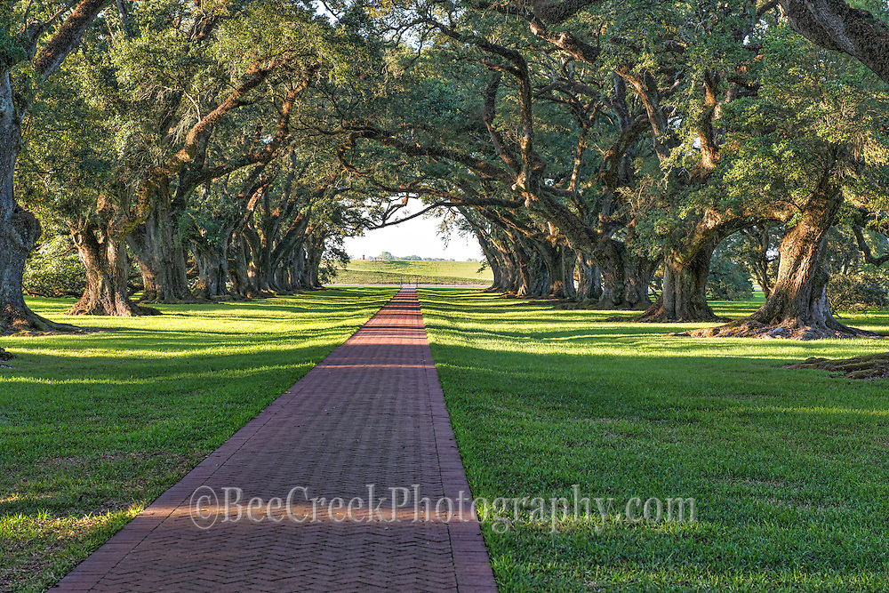 A look down through this alley of 300 year old live oaks trees that line the path toward river road and the banks of the Mississippi river from the Oak Alley plantation.