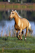 Bob, ANIMALS, REALISTISCHE TIERE, ANIMALES REALISTICOS, horses, photos+++++,GBLA3688,#a#, EVERYDAY