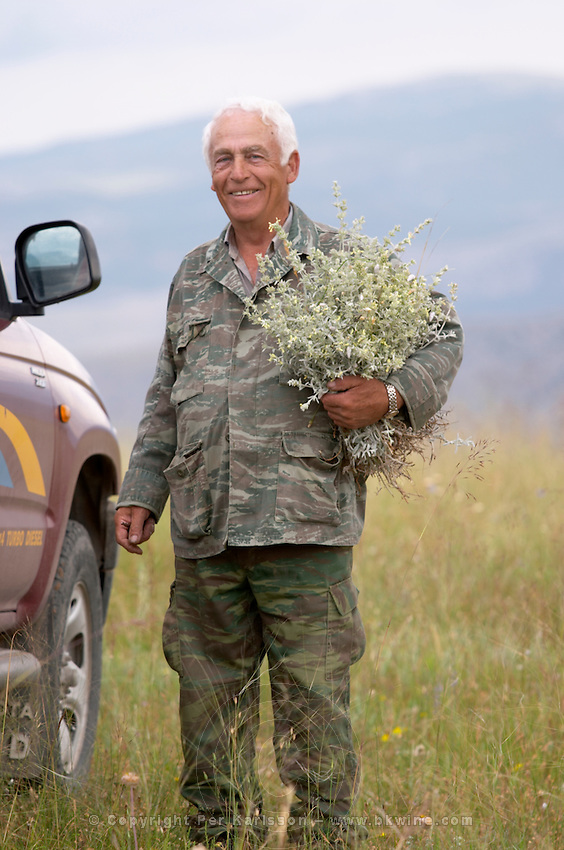 Man collecting herbs in the field. Amyndeon Amindeo region, Macedonia, Greece