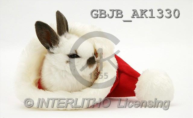 Kim, CHRISTMAS ANIMALS, photos(GBJBAK1330,#XA#) stickers