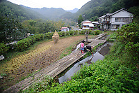 Marutou Wasabi CEO Tomoya Iida with his daughter by their rice paddy, Shimoda, Japan, October 17, 2010.