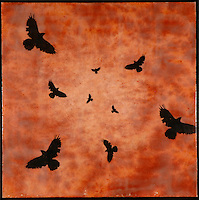 Murder of crows in sunset sky in mixed media encaustic photo transfer by Jeff League.