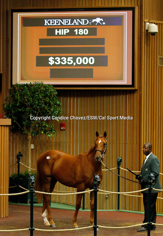 September 14, 2015: Hip 180 Smart Strike - Cloudburst filly consigned by Denali Stud.  Candice Chavez/ESW/CSM