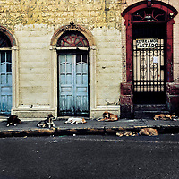 A pack of street dogs sleep in front of an unmaintained house, designed by using Spanish colonial architecture elements, built in the center of San Salvador, El Salvador, 9 November 2016.