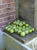 A pile of green apples from a tree in the garden waits to be washed in the outdoor sink