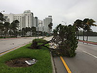 Fallen tree caused by Hurricane Irma in Miami Beach, Fla. on September 9, 2017.