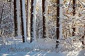 Marek, CHRISTMAS LANDSCAPES, WEIHNACHTEN WINTERLANDSCHAFTEN, NAVIDAD PAISAJES DE INVIERNO, photos+++++,PLMP01086Z,#xl#