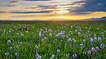 Idaho, South Central, Camas County, Fairfield. a spring sunset over the Camas blooms on the Centennial Marsh.