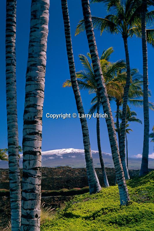 Coconut palms and Mauna Kea<br />   from Mauna Lani Bay Resort<br /> South Kohala<br /> Island of Hawaii, Hawaii