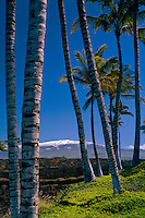 Coconut palms and Mauna Kea<br />