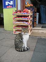 """""""Finicky"""" cat"""