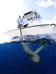Thresher Shark, Big Eye Thresher shark
