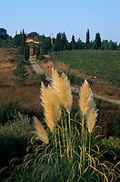 Italien, Toskana, bei Greve