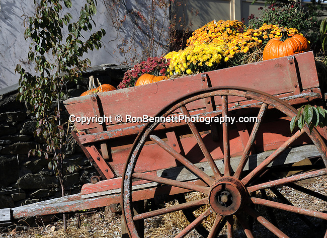 Autumn flowers and pumpkins in old wagon Shepherdstown Jefferson County West Virginia, Shepherdstown Jefferson County West Virginia,  Shepherdstown oldest town in West Virginia 1734, Thomas Shepherd granted 222 acres on south side Potomac river, Mecklenburg, Shepherd University, Fine Art Photography by Ron Bennett, Fine Art, Fine Art photography, Art Photography, Copyright RonBennettPhotography.com ©