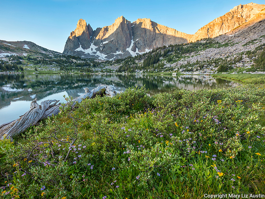 Wind River Range, WY: Sunrise light on Warrior Peaks and War Bonnet with asters and groundsel blooming among low growing willows next to Lonesome Lake in the Cirque of the Towers; Bridger Wilderness in the Bridger National Forest