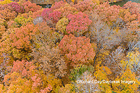 63876-02309 Aerial view of fall color trees Stephen A. Forbes State Park Marion Co. IL