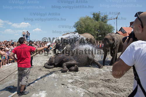 Photographer takes pictures of elephants of the Hungarian National Circus take a bath at lake Balaton promoting the Circus Night event at Balatonlelle (about 140 km South-West of capital city Budapest), Hungary on July 14, 2018. ATTILA VOLGYI