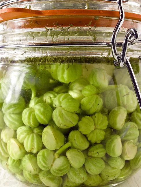 Nasturtium seeds being prepared & pickled