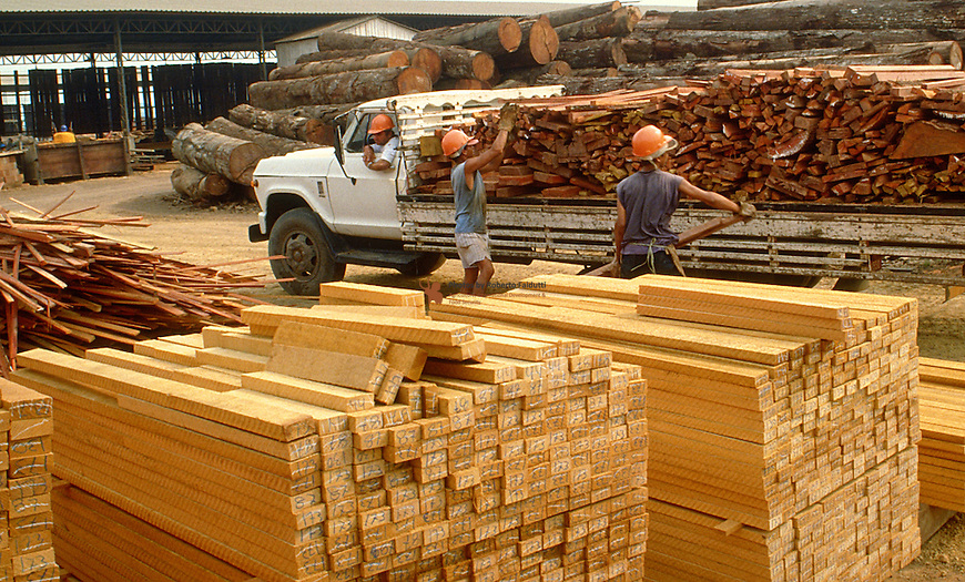 Sawmill  workers loading industrial waste wood.