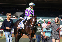 "LEXINGTON, KY - October 11, 2017. #2 Rushing Fall and jockey Javier Castellano win the 27th running of the JPMorganChase Jessamine Grade 3 $150,000 ""Win and You're In Breeders' Cup Juvenile Fillies Turf Division"" for owner E Five Racing Thoroughbreds (Robert Edwards Jr.) and trainer Chad Brown at Keeneland Race Course.  Lexington, Kentucky. (Photo by Candice Chavez/Eclipse Sportswire/Getty Images)"