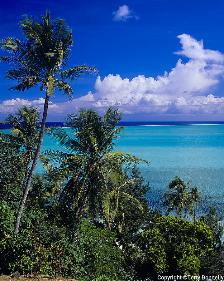 Bora Bora, French Polynesia   <br /> Coconut Palm trees (Cocos nucifera) above the tropical blue waters of Bora Bora lagoon and Taahina Bay
