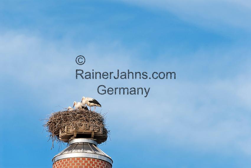 Deutschland, Bayern, Oberbayern, Hopfenanbaugebiet Hallertau (Holledau), Stadt Geisenfeld: Storchennest mitte im Zentrum, Alt- und Jungvoegel | Germany, Upper Bavaria, hop-planting area Hallertau (Holledau), town Geisenfeld: stork's nest right in the centre of town