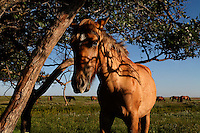A curious yearling finds a good tree for back scratching in North Dakot at the International Society for the Protection of Mustangs and Burros.