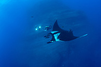 Giant Manta, Manta birostris, with divers using rebreathers. The Boiler, San Benedicto Island, Revillagigedo Archipelago, Mexico, Pacific Ocean
