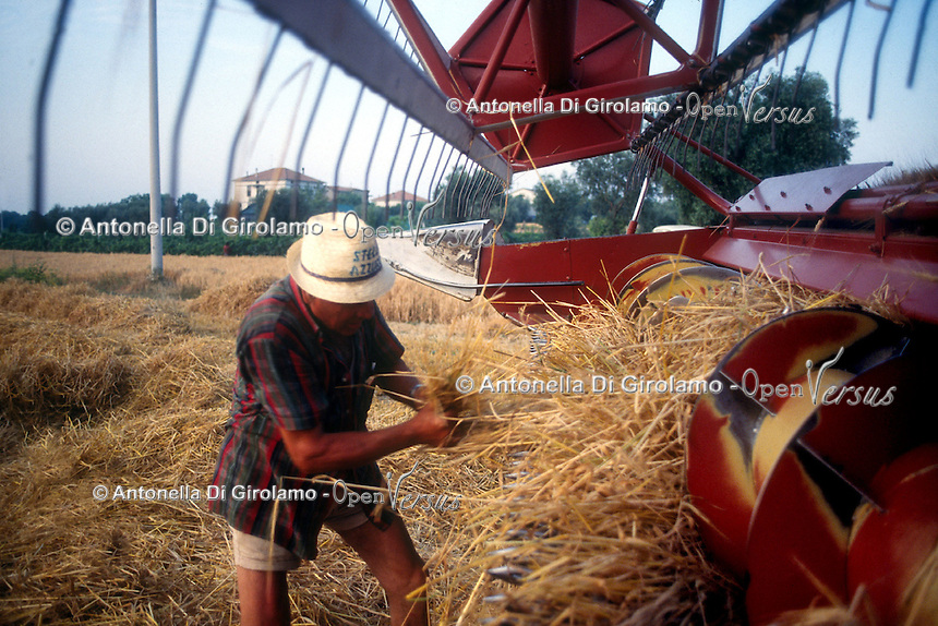 Raccolta di grano. Grain harvest....