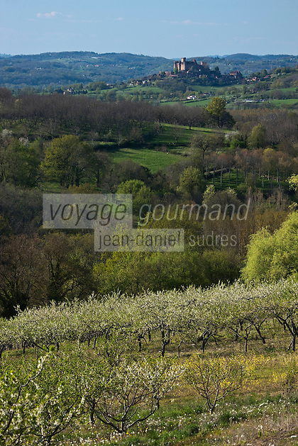 Europe/Europe/France/Midi-Pyrénées/46/Lot/Env de Saint-Médard-de-Presque: Vergers de Pruniers