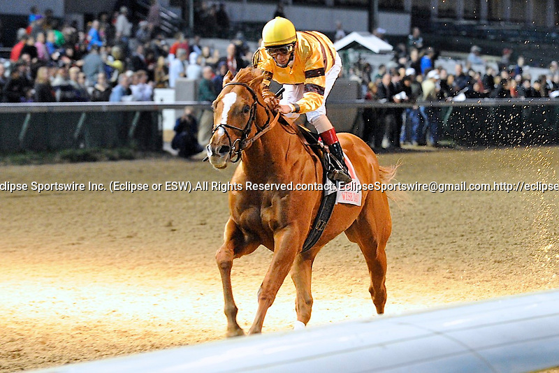 Wise Dan (no. 11), ridden by John Velazquez and trained by Charles Lopresti, wins the 137th running of the grade 1 Clark Handicap for three year olds and upward on November 25, 2011 at Churchill Downs in Louisville, Kentucky.  (Bob Mayberger/Eclipse Sportswire)