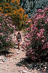 Italie. Italia. Sardaigne. Sardinia.balade entre mimosas et lauriers roses en descendanrt vers la calanque de Cala Luna