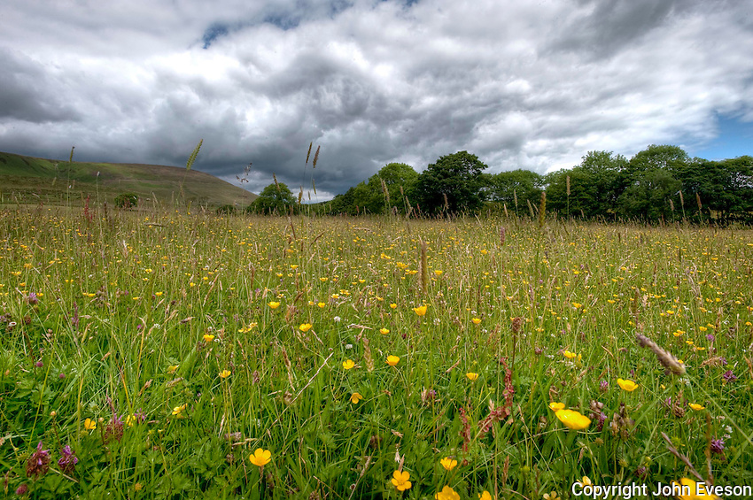 HDR image of grass meadow, Whitewell, Lancashire.