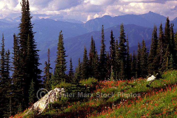 Mount Revelstoke National Park, Canadian Rockies, BC, British Columbia, Canada - Wildflowers blooming in Alpine Meadows, Summer