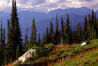Mount Revelstoke National Park, Canadian Rockies, BC, British Columbia, Canada - Wildflowers blooming in Alpine Meadows, Summer