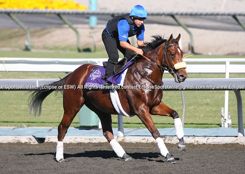 03 November 2009: Buzzword gallops in preparation for the Breeders' Cup at Santa Anita Park