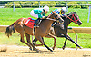 Dad's City Girl winning at Delaware Park on 6/28/17