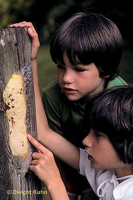 SD08-038x  Slime Mold - children looking at slime mold - Fuligo septica