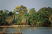 Nr Manaus, Amazonas State, Brazil; logs floating in the river, two Indians in a small canoe.