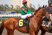 Animal Kingdom on post parade with jockey John Velazquez, before winning his 2012 debut at Gulfstream Park, Hallandale Beach Florida