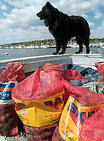 Dog on clam boat, Narragaanseet bay near Warwick, Rhode Island
