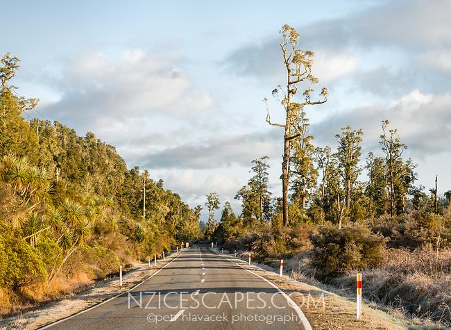 Scenic West Coast road through native forest of kahikatea at Lake Wahapo near Whataroa at sunrise, Westland Tai Poutini National Park, West Coast, UNESCO World Heritage Area, New Zealand, NZ