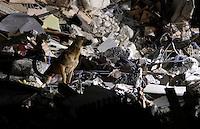 A detection dog work on rubble of collapsed buildings in the village of Amatrice, central Italy, hit by a magnitude 6 earthquake at 3,36 am, 24 August 2016.<br /> Un cane da soccorso al lavoro tra le macerie degli edifici crollati dopo il terremoto che alle 3,36 del mattino ha colpito Amatrice, 24 agosto 2016.<br /> UPDATE IMAGES PRESS/Isabella Bonotto