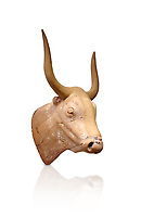 The Minoan clay bull's head rhython lbation vessel,  Palaikastro 1500-1450 BC; Heraklion Archaeological  Museum, white background