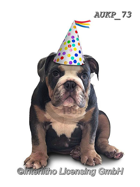 Samantha, ANIMALS, REALISTISCHE TIERE, ANIMALES REALISTICOS, funny photos, photos+++++,AUKP73,#a#, EVERYDAY ,party