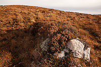 A peat bog in its natural state near Galway.