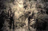 Deep South II - Textures Part 1