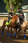 ARCADIA, CA - JUNE 19:  The 13th Triple Crown Champion, Justify, with Humberto Gomez up is ponied to the track by assistant trainer Jimmy Barnes, for the first time after returning home to Santa Anita Park on June 19, 2018 in Arcadia, California.(Photo by Alex Evers/Eclipse Sportswire/Getty Images)