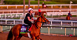 October 28, 2019 : Breeders' Cup Mile entrant Got Stormy, trained by Mark E. Casse, exercises in preparation for the Breeders' Cup World Championships at Santa Anita Park in Arcadia, California on October 28, 2019. Scott Serio/Eclipse Sportswire/Breeders' Cup/CSM