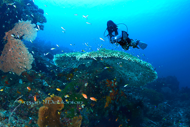 Colorful Reef ,Larantuka, eastern end of Flores Island, East Nusa Tenggara, Indonesia. ,